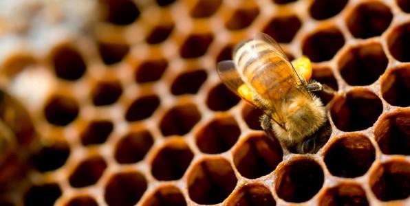 Les abeilles, exemples de propreté.