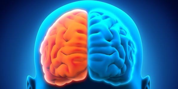 cerveau 10% mythe intelligence créativité