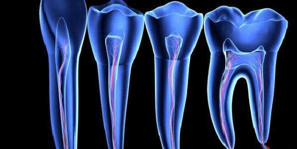 cellules souches cellules spécialisées cellules indifférenciées dent carie traitement cerveau cellules gliales