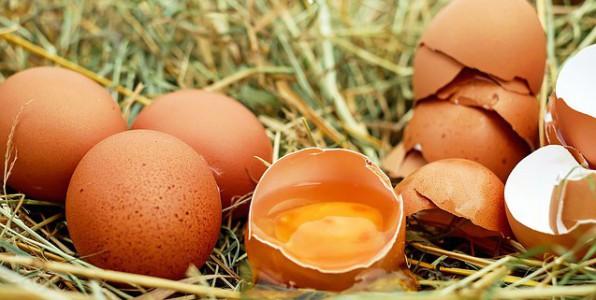 Contamination d'œufs au fipronil.