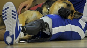 handicap handicapé prothèse sport jeux paralympiques prothèse sportive prothèse orthopédique
