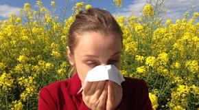 printemps allergies pollinisation pollen allergique