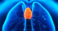 organe thymus reprogrammation cellules système immunitaire lymphocytes T