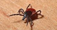 tique législation prévention débat santé maladie maladie de Lyme