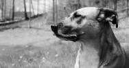 cancer sein intestin prostate chien dépistage renifleurs dressage