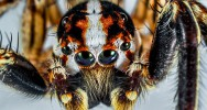 AVC accident vasculaire cérébral venin araignée cerveau conséquences médicament