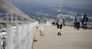 chien santé stress maladie homme maladies cardiovasculaires
