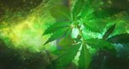 cannabis drogue consommation adolescence risque pyschotique schizophrénie