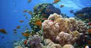 crème solaire protection solaire interdiction santé publique pollution récif corallien