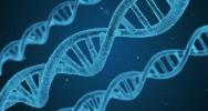 naissance bébé Génétiquement modifié ADN