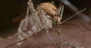 hydroxyurée drépanocytose paludisme enfant maladie