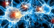 maladie neuromusculaire espoir traitement fibre musculaire