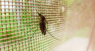 Résistance maladie paludisme médicament anti-paludique Asie
