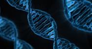 maladie cardio-vasculaire facteur génétique mutation