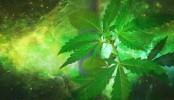 Le cannabis peut avoir un impact important sur les risques psychotiques chez les ados.